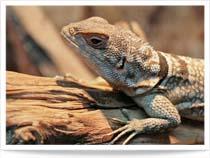 Unteruhldingen: Reptilienhaus