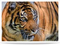 Zoo Heidelberg mit Bilder und Video