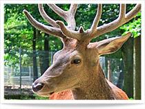 Wildpark Pforzheim mit Bilder und Video