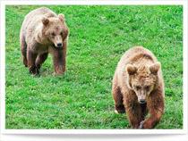 Wildparadies Tripsdrill mit Bilder und Video