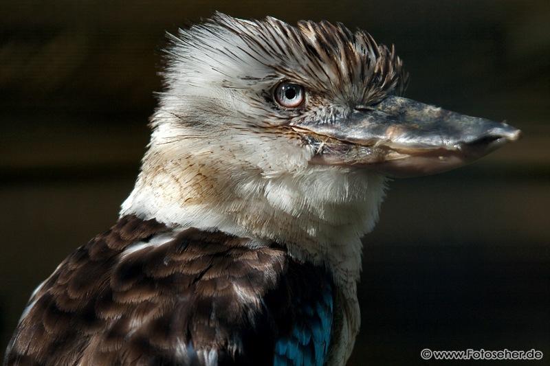 Fotos vom Tier- und Vogelpark Forst (Baden)
